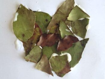leafcollage