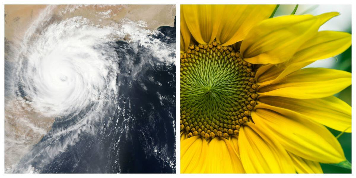 The golden ratio shown in nature