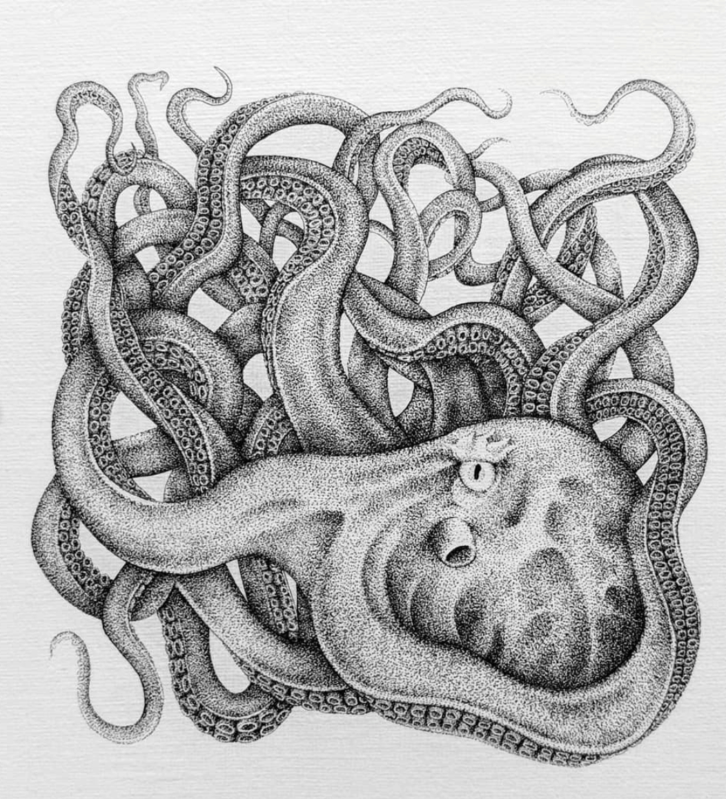 Aridz1 octopus drawing