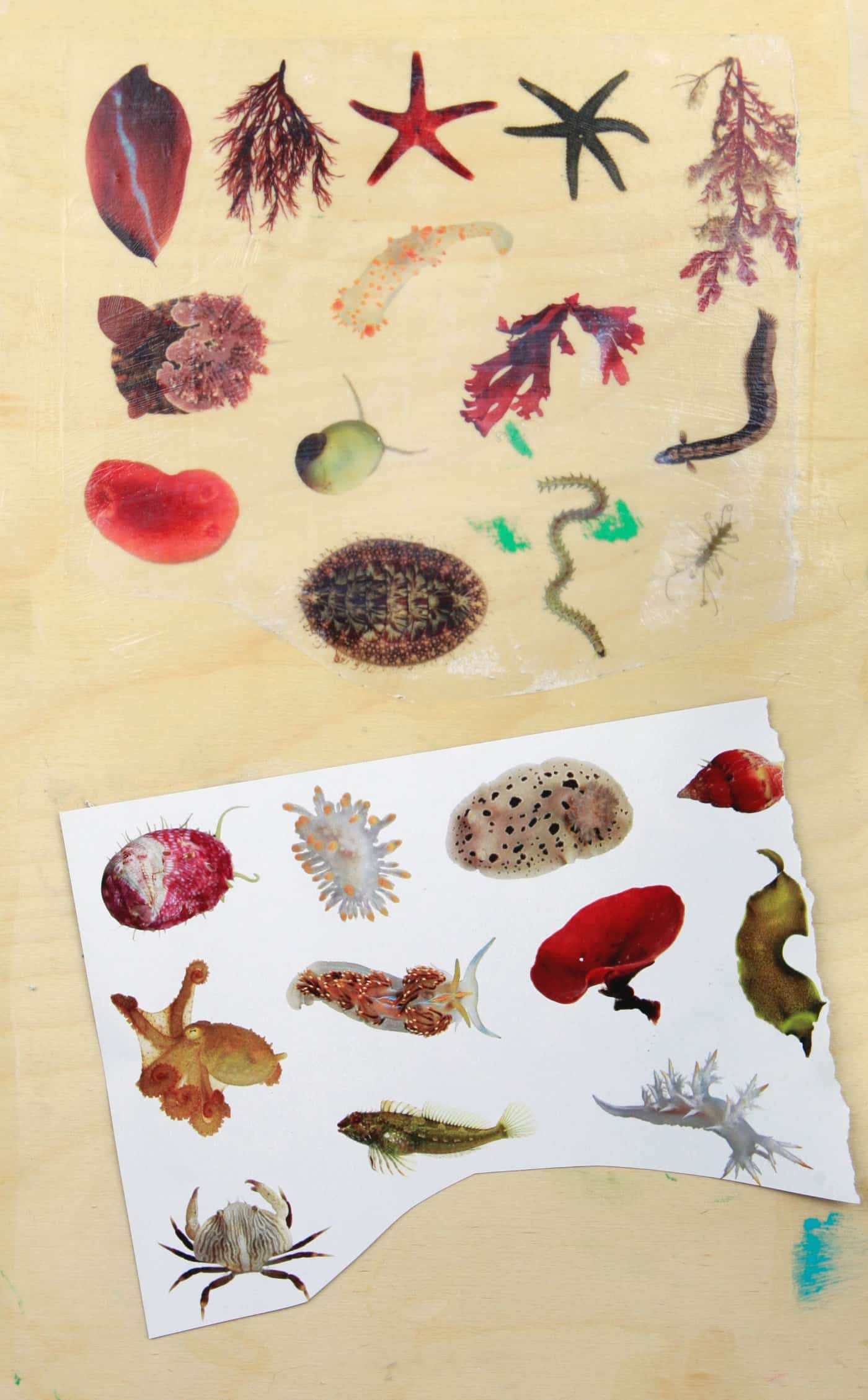 print transfer on wood - sea creatures