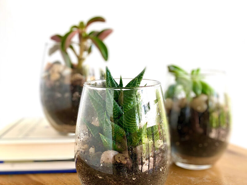 wine glass succulent planters
