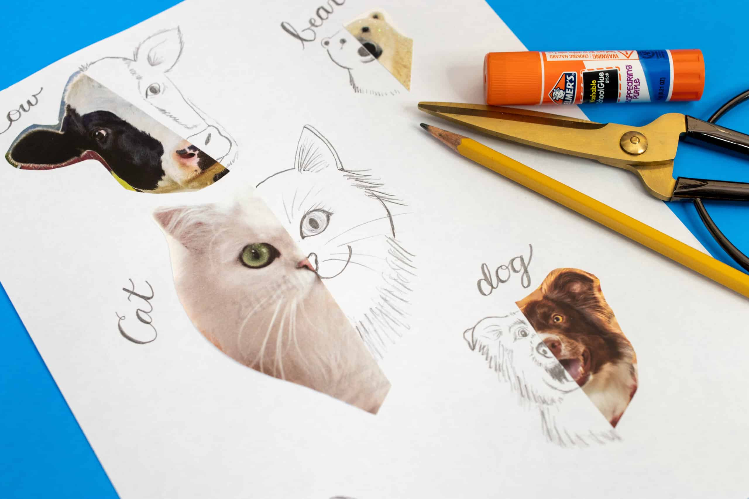Easy & Fun Animal Drawing Ideas for Kids